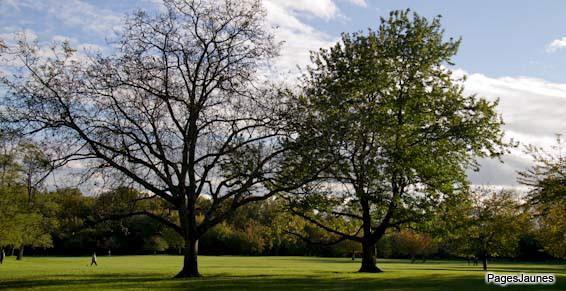 design paysages image arbres