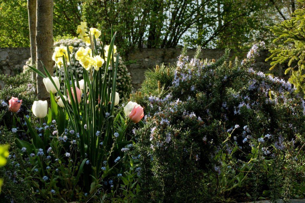 design paysages image plantes